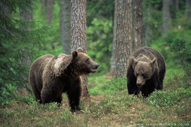 Az erdészek is keresik a medvét Hevesben