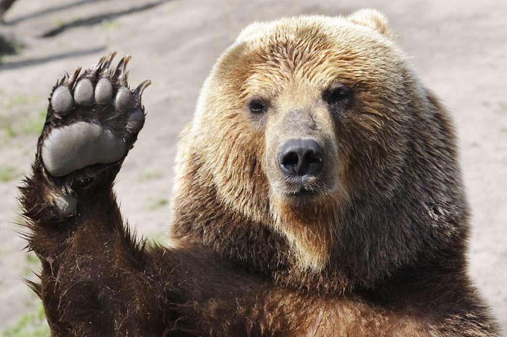 Brumm-brumm – így érdemes viselkedni, ha egy medve akad az utunkba