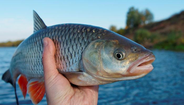 Engedély nélkül halásztak, de lebuktak