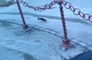 Cukiságfaktor: mókus szaladgált az Almagyar utcán – videó