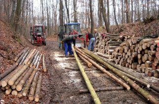 Fakitermelési munkálatok a Pásztó–Galyatető–Mátraháza összekötő úton