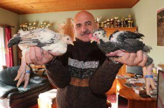 A vietnami óriáslábú csirkék ára százezrekben mérhető, és tojásuk is /Fotó: Weber Zsolt