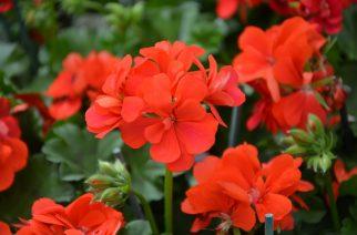 Virágos Egerért – már lehet jelentkezni