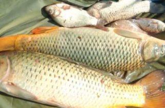 Ároktőnél fogták el az orvhalászt