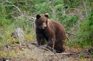 Medvék a határban – Lakossági tájékoztató fórum Pétervásárán