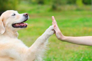 Minden kutya megérdemli, hogy boldog legyen – Nyílt nap az Egri Kutyasuliban!