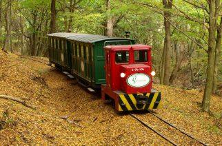 Az erdei vonatok hétvégén is zakatolnak