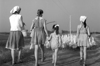 Sok lúd disznót győz – Ma van Szent Márton napja