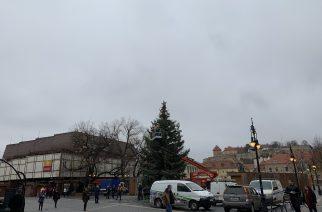 Láss csodát – újra áll a Dobó téri karácsonyfa! – videó