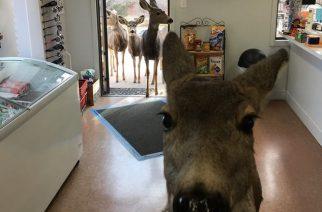 Amikor Bambi elment a családdal shoppingolni…
