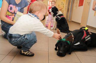 Tűzoltó Mikulás és terápiás kutyák – a kis betegek örömére