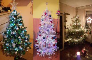 Nagy érdeklődés övezi az Eger Hírek Karácsonyfa Szépségversenyét