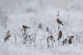 A téli erdő titkai – fotók