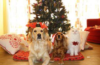 Menhelyi állatok Karácsonya az egri Keriben