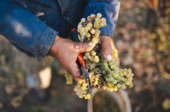 A bor születéséről…